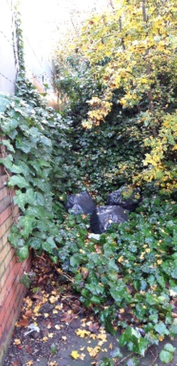 side of IDR opposite Coley primary. bags of rubbish in the bushes.-53 Wolseley Street, Reading, RG1 6AZ