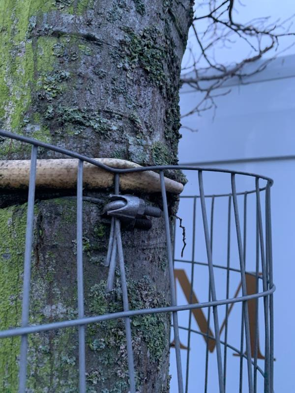 Servers log the trees still have the guards which are now cutting into the trees Originally reported in September 2019 image 1-23 Buxton Road, London, E15 1QU