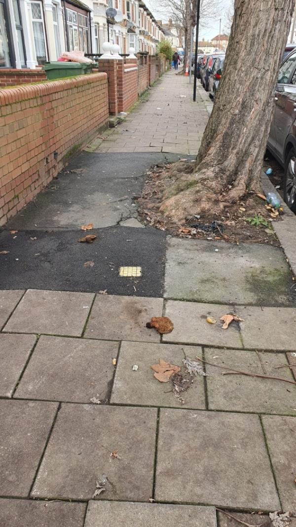 dog poo-48a Lucas Avenue, Plaistow, E13 0RL