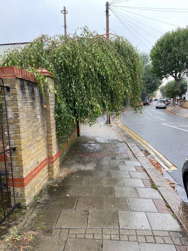 Overhanging tree covering the street-57 Grangewood Street, East Ham, E6 1HA