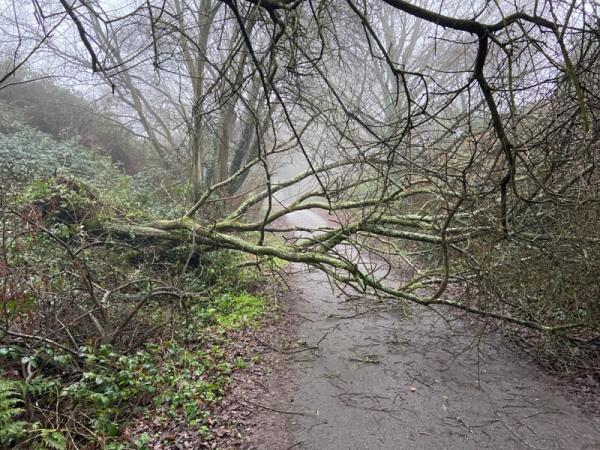 Fallen tree. Completely blocking way. Only passable by the very keen and agile -128 Worcester Road, Chichester, PO19 5EE