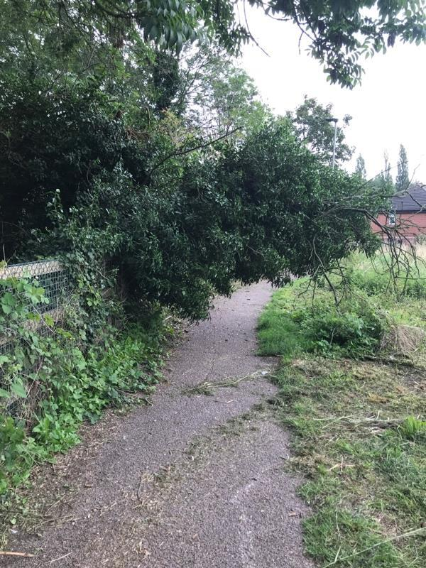 Tree down blocking patth-8c Woodshawe Rise, Leicester, LE3 3AN