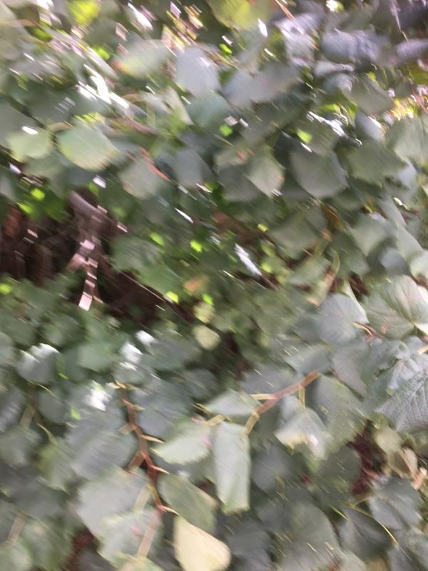 All this tress like bushes at the back sides of our houses from house Num one to house Num 23 needs being into look after as no one has come to cut them down and as it's winter on the way getting Dark nights is scary to walk from here so if you can look into this matter seriously as all family's leaving here using the Rd to walk round to there houses -12 Selkirk Road, Leicester, LE4 7ZQ
