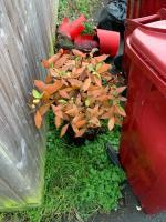 More fly tipping down the back and side of my house.  image 2-8 Don Cl, Reading RG30 4YL, UK