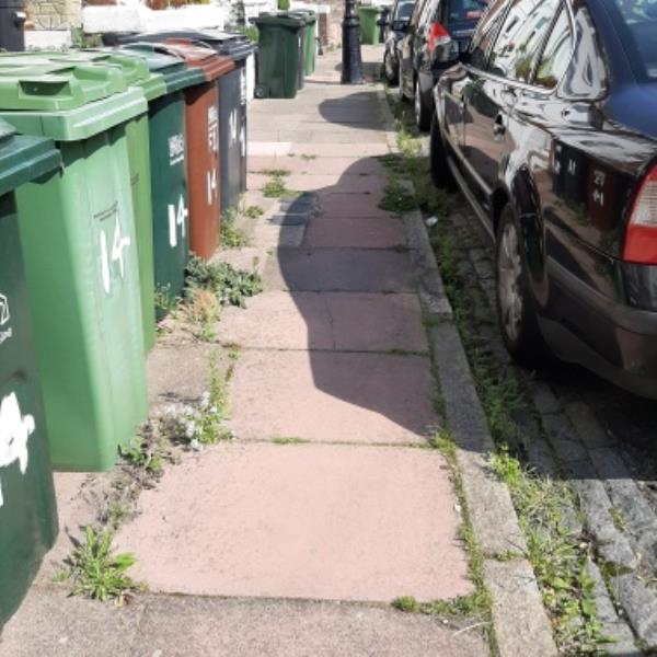 REFER TO SEESL 16/09/20. Weeds overgrown on pavement St. Mary's Road, Old Town. Part of the road has been weeded but the rest has bot been done. Could this road be fully weeded ASAP.-9 Saint Mary's Road, Eastbourne, BN21 1QD
