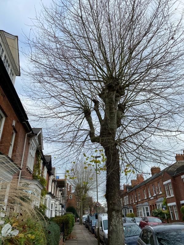 Street trees on Howard Rd are growing beyond roof edges and require pollarding.-66 Howard Road, Leicester, LE2 1XH