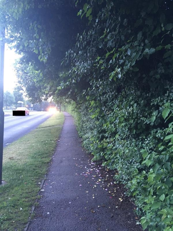 Highway vegetation overhanging and narrowing pavement and blocking street lights after dark. -1 Baylis Crescent, Burgess Hill, RH15 8UP