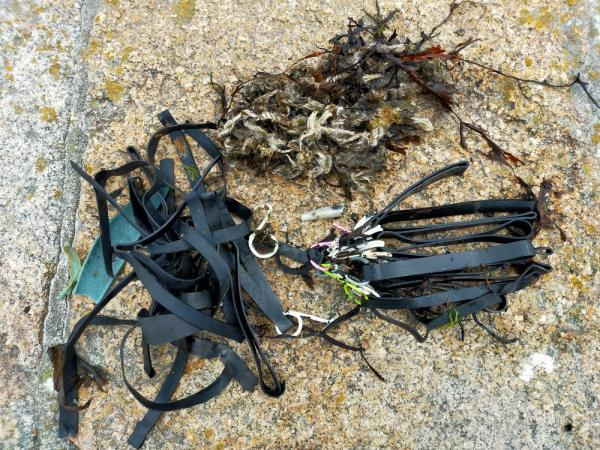 These photos are of litter (predominantly rubber bands from the oyster farm) collected on 3 consecutive days at the same location image 2-La Rochelle Cottage, La Grande Route des Sablons, Grouville, Jersey, JE3 9FN