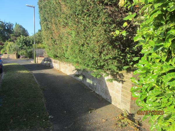 Footpath on Rosemary Avenue obstructed by overgrown hedge (Leylandi)  The offending hedge is located at 22.Rosemary Avenue. image 1-22 Rosemary Avenue, Steyning, BN44 3YS