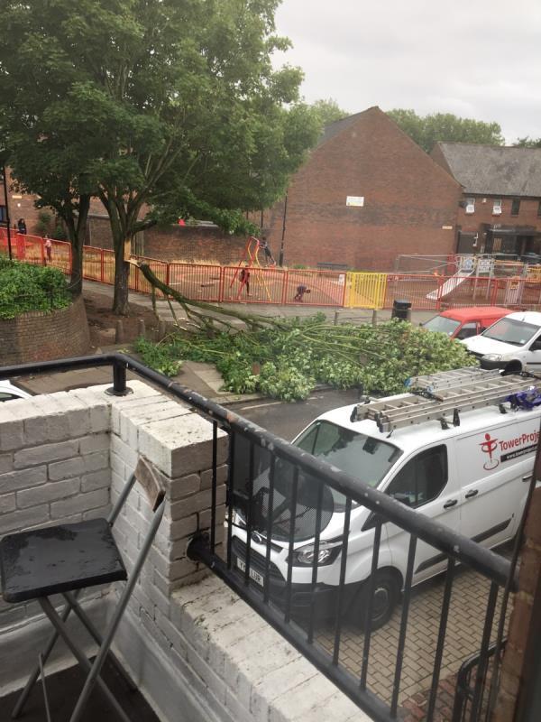 Fallen tree-4 Stonebridge Road, London, N15 5PF