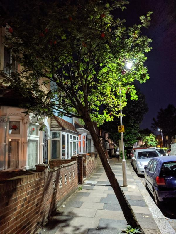 dangerous leaning tree-3 Western Road, London, E13 9JE