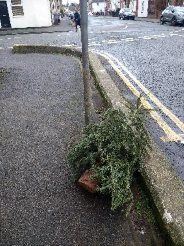fly tipped Xmas tree-61 George Street, Reading, RG1 7NP