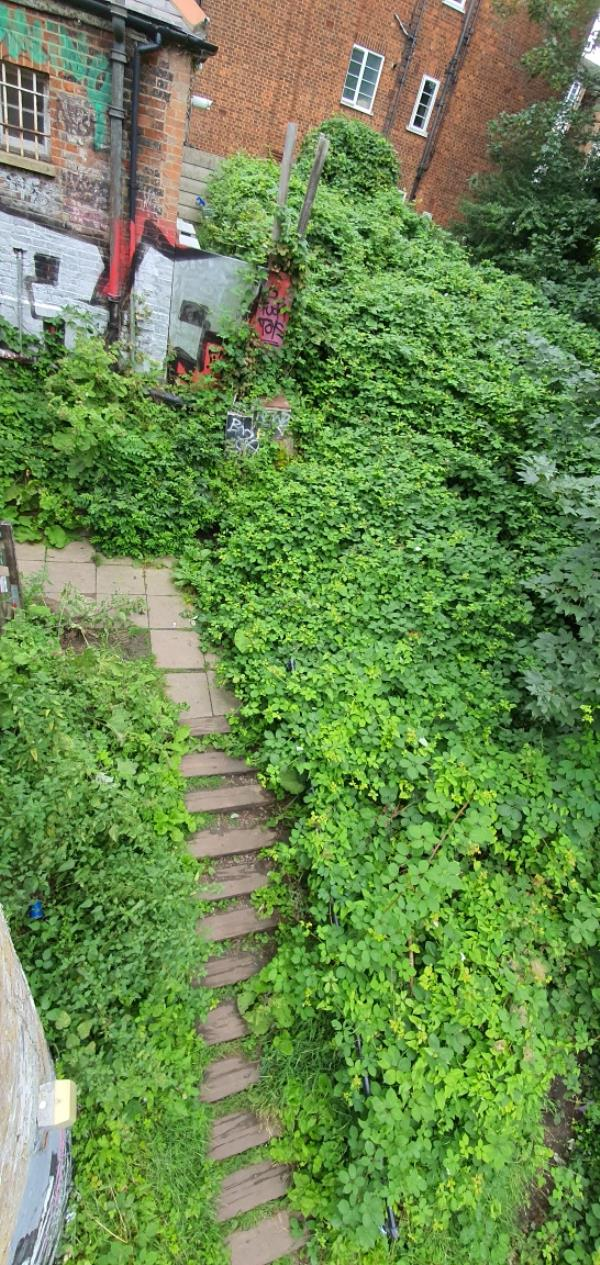 Trees, wildflowers blocked staircase and around its difficult to walk could you please someone clear around. Thanks-85 Crouch End Hill, Crouch End, N8 8DD