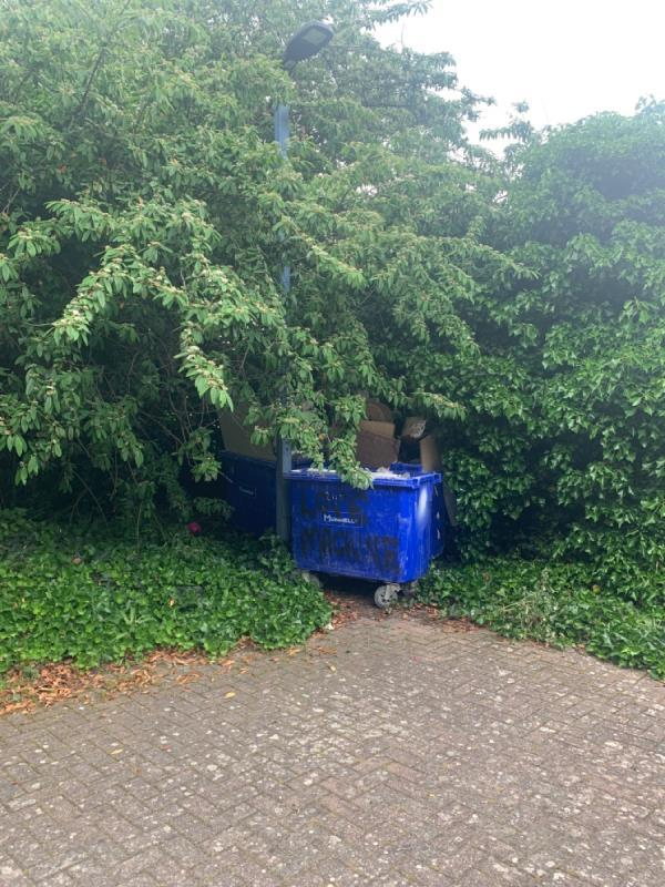 Three large blue bins filled with polystyrene, plasterboard, cable, chip board and other rubbish.  They seem to have been fly tipped as they've been pushed into the bushes along North Woolwich Road, near the gate entrance to Grain Silo D.  -Cape House, 2 Starboard Way, North Woolwich, E16 2BE