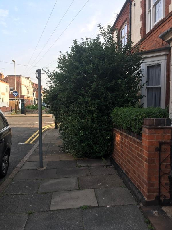 Overgrown hedge.-63 Eastleigh Road, Leicester, LE3 0DD