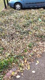 hedges trimmed, all rubbish left behind-3 Blue Gates Rd, Leicester LE4 1AF, UK