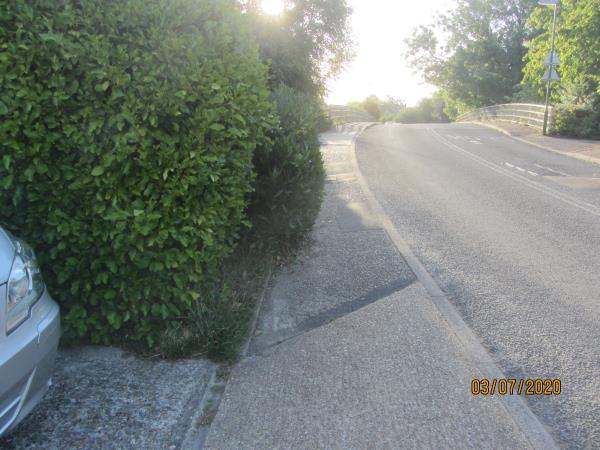 Overgrown hedge on boundary of property, partially obstructing narrow footpath which is used regularly by parents and their children.-Holly Tree Cottage, Jarvis Lane, Steyning, BN44 3GL