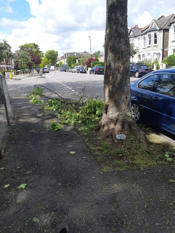 Large tree branch on pavement -18 Thornsbeach Road, London, SE6 2JZ