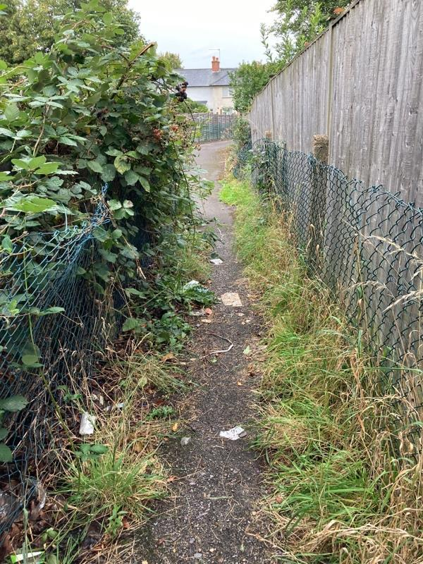 This need trimming and a litter pick-6 Tichborne Place, Aldershot, GU12 4ER