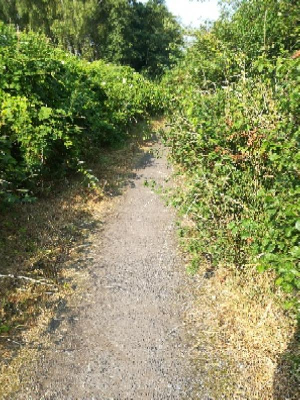 Customer reporting shrubs and nettles encroaching onto the path on Weddell Wynd Open Space on the path at junction with Peter Avenue -51 Peter Avenue, Bilston, WV14 8UJ