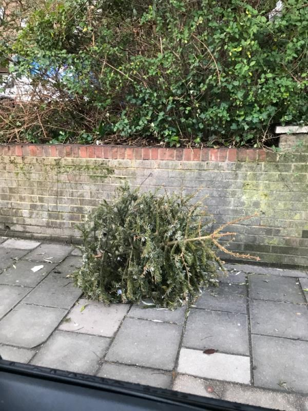 Christmas tree -243a Kirkdale, London, SE26 4NL