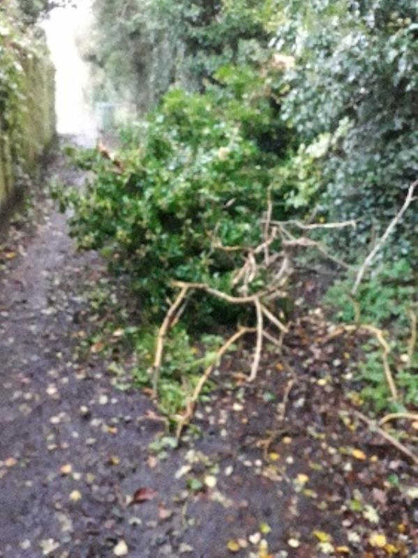 Tree fallen in pathway at the end of Coton Road. -Ryecroft Cottages, Coton Rd, Wolverhampton WV4 5AS, UK