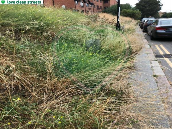 Overgrown foliage, unable to walk, push pram or wheelchair along. Have to go around parked cars into oncoming traffic to get through -51 Cold Blow Ln, London SE14 5RB, UK