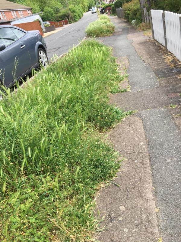 Is this what we pay our council taxes for so that our grass verges can grow higher than the wing mirrors on the cars alongside ?!!!-71 Keyham Lane, Leicester, LE5 1FH