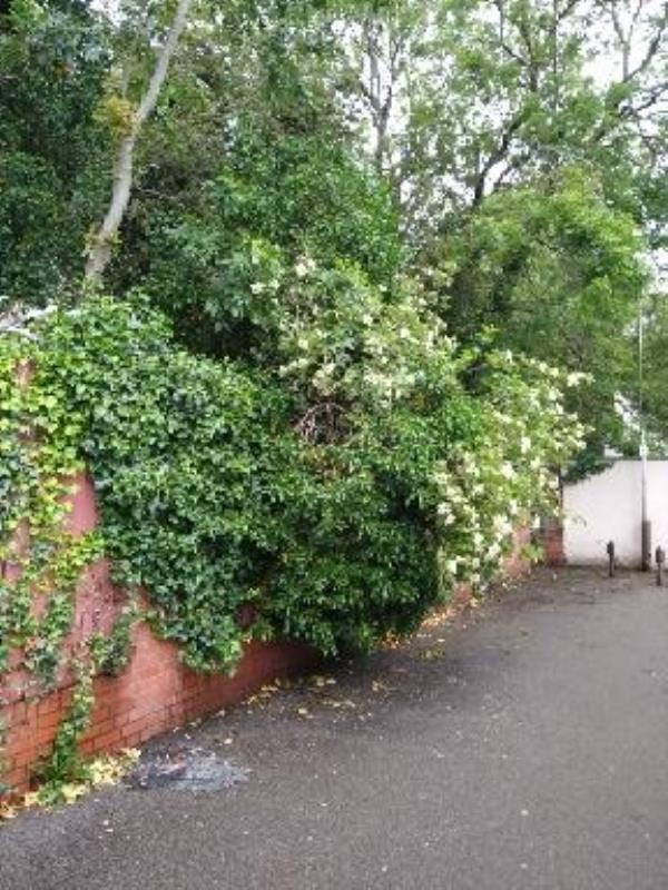 tree collapsed in the wind, now resting on a fence-37 Raymond Road, Leicester, LE3 2AS