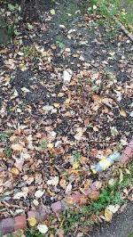 hedges trimmed, all rubbish left behind image 1-3 Blue Gates Rd, Leicester LE4 1AF, UK