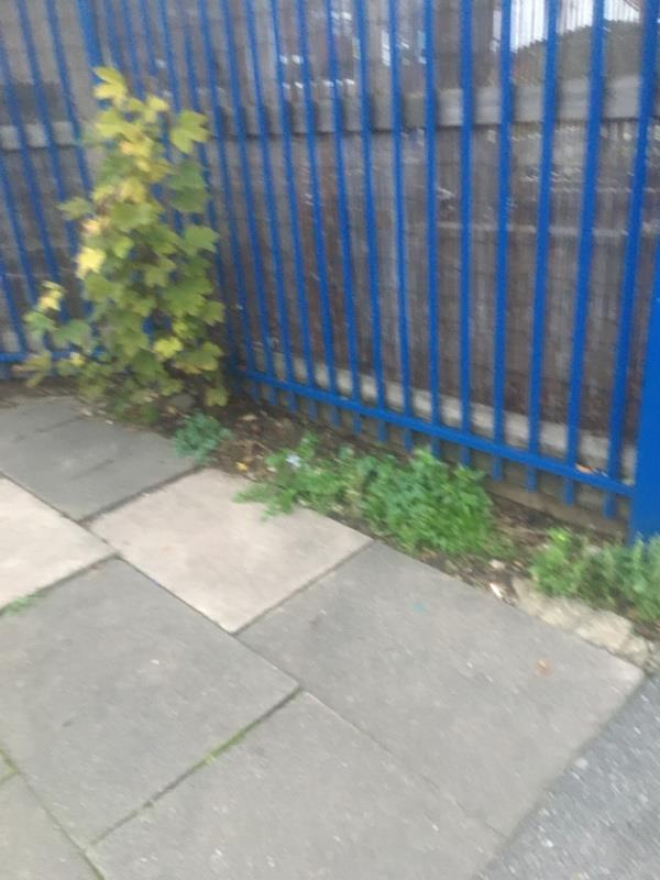 Weeds all way down, big job maybe why it keeps being closed without action-6 Forest Ln, Forest Gate, London E7 9BG, UK