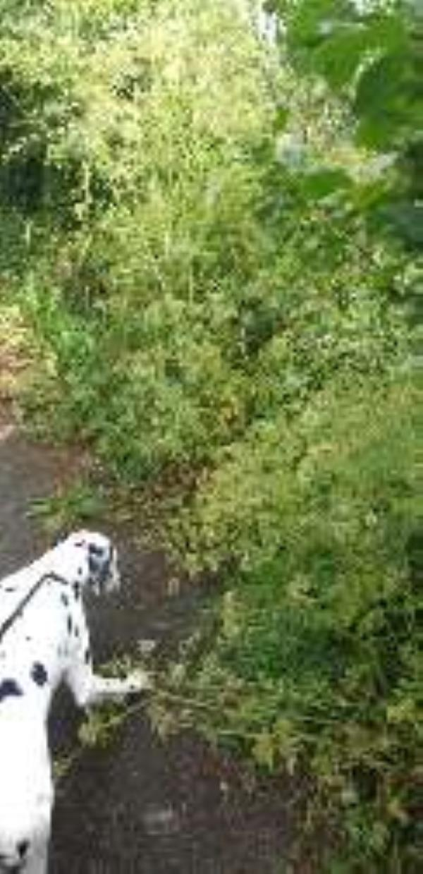 totally overgrown -11 Rilshaw Ln, Winsford CW7 3PE, UK
