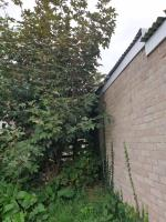 There are three trees that have sprung up this year and need cutting back as they will compromise the block of garages if they continue to grow.  Please Daniel they all be removed. image 1-39 Fircroft Close, Reading, RG31 6LJ