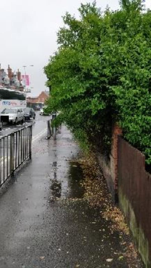 Hedge blocking path-2 Wyngate Dr, Leicester LE3 0US, UK