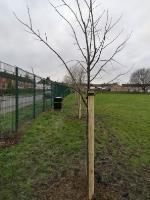Thank you for the new trees, Allexton Gardens Park. Thanks from us all.  image 2-44 Allexton Gardens, Leicester, LE3 6LA