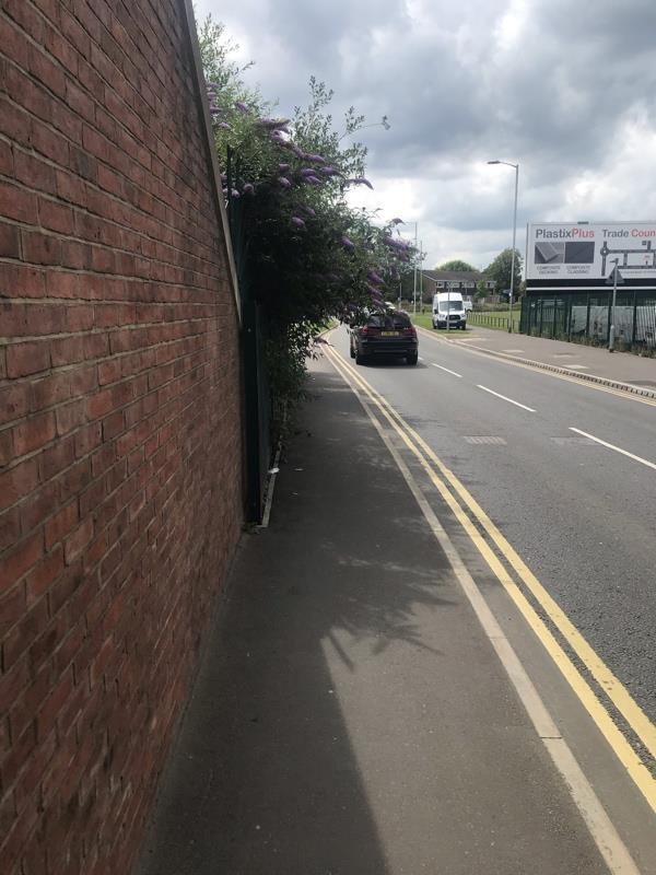 Overgrown vegetation hitting cyclists head when they cycle-138 Salisbury Rd, Reading RG30 1BN, UK