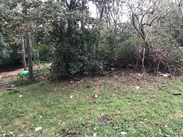 Litter Scattered everywhere in the forest . Possibly never cleaned  image 1-72 Hallywell Crescent, London, E6 5XR