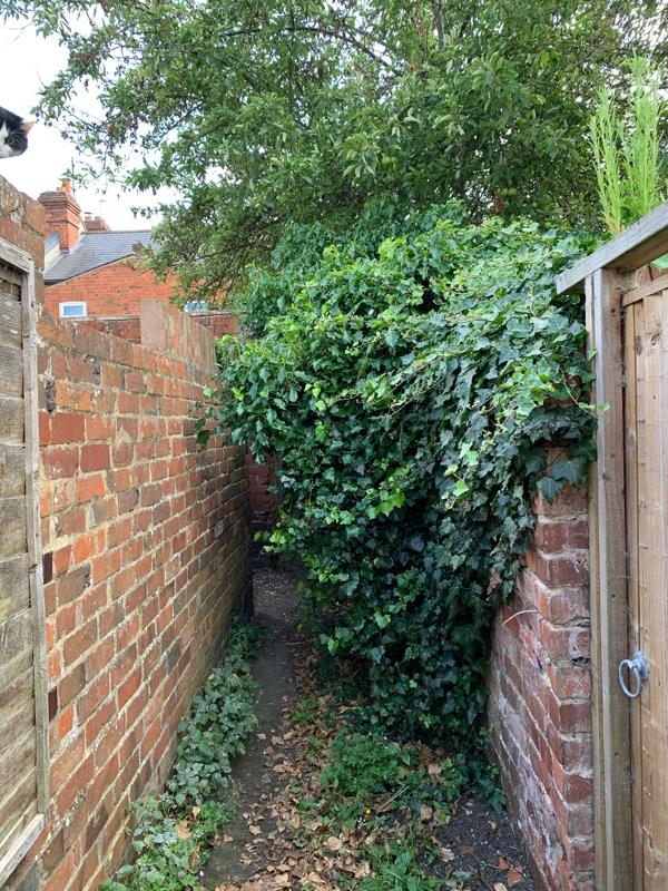 Alley needs clearing of vegetation  behind houses between Chester St and Oxford road from hedges and vegetation and also between streets towards Hemdean side-39 Hemdean Road, Reading, RG4 8JH