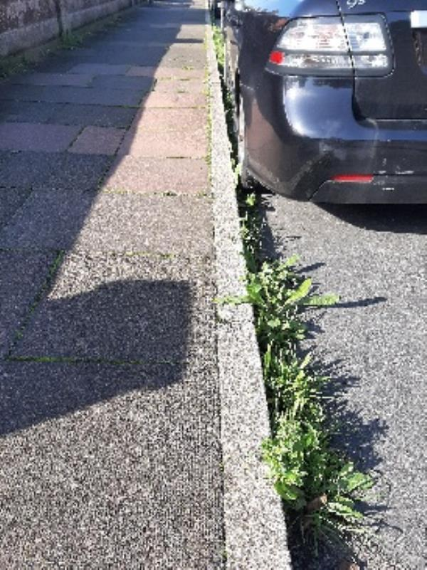 SEESL JN EBC Zone 1 22/10/19 @ 1.30pm please can you arrange to do a street clean up of weeds, the area along the whole length or Winchelsea Road (Odd Number side) is looking very untidy and complaints have been coming in. Many Thanks Jo-32 Winchelsea Road, Eastbourne, BN22 7PR