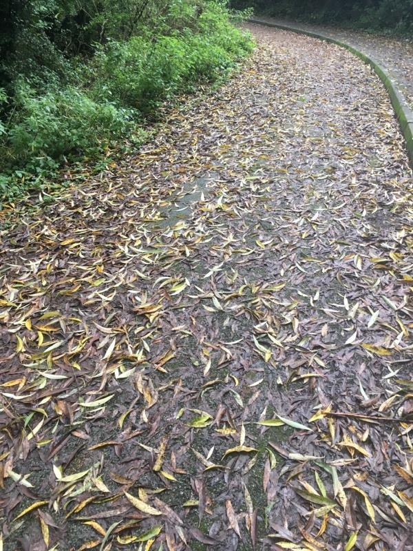 Cycle path covered in slimy leaves on downhill corner. Medial cracks in surface beneath leaves. Very dangerous. Route used by schoolchildren.-7 Tudor Way, Chester, CH3 5XQ