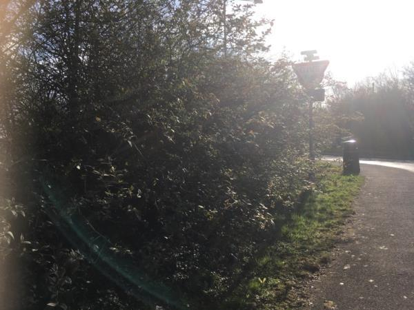 This coppice, hedge hasn't been cut in a very long time and is detrimental to its health and growth.  Please can it be trimmed and tidied as necessary. Thanks-25 Forest Street, Weaverham, CW8 3JH