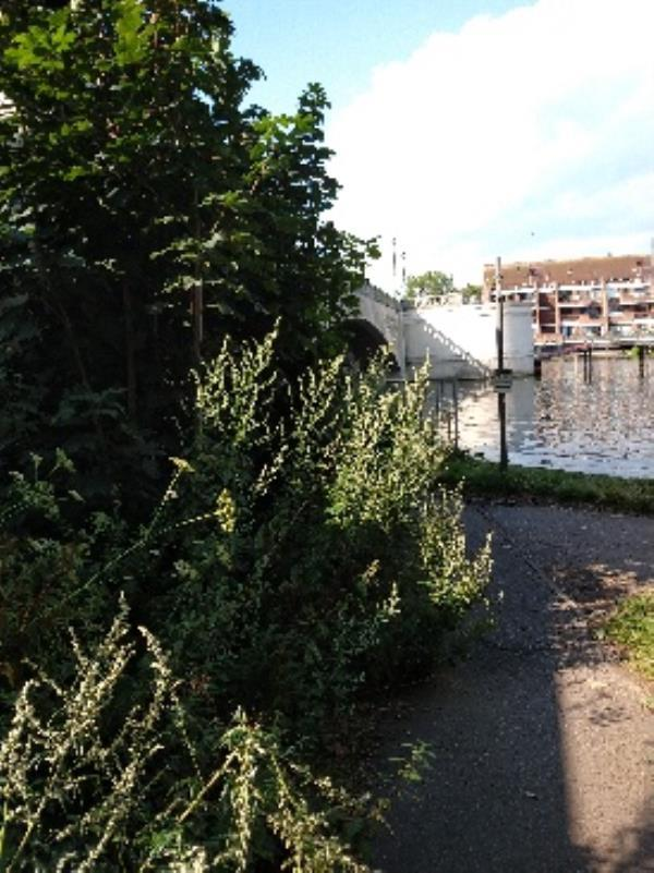 vegetation along footway at sides of caversham bridge needs cutting its usually cut around now before the festival so hope it's in hand ? it  got missed last year.-206 Caversham Road, Reading, RG1 8AZ