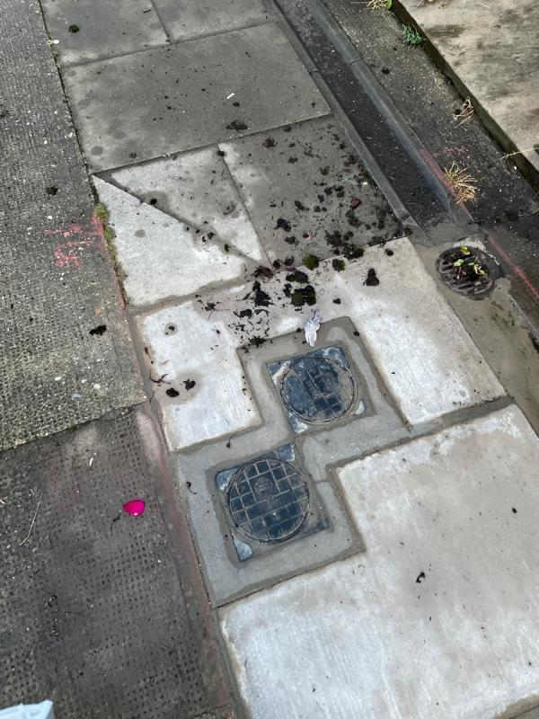 Lots of moss and debris on the pavements blocking up the drains  image 1-164 Humberstone Road, Plaistow, E13 9NH