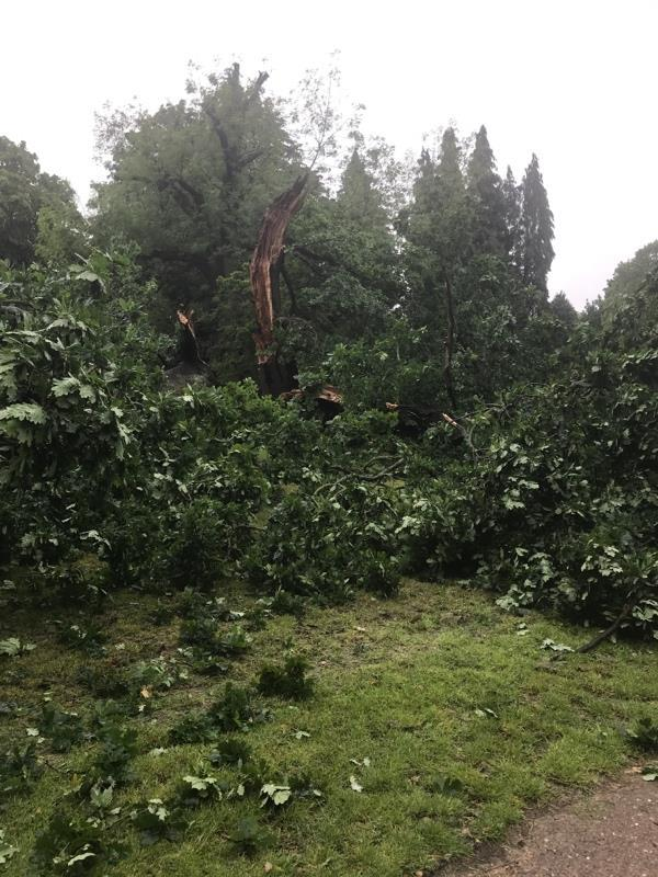 Tree down next to the outdoor gym and across the path to the changing rooms in western park-Western Park House Western Park, Leicester, LE3 6HX
