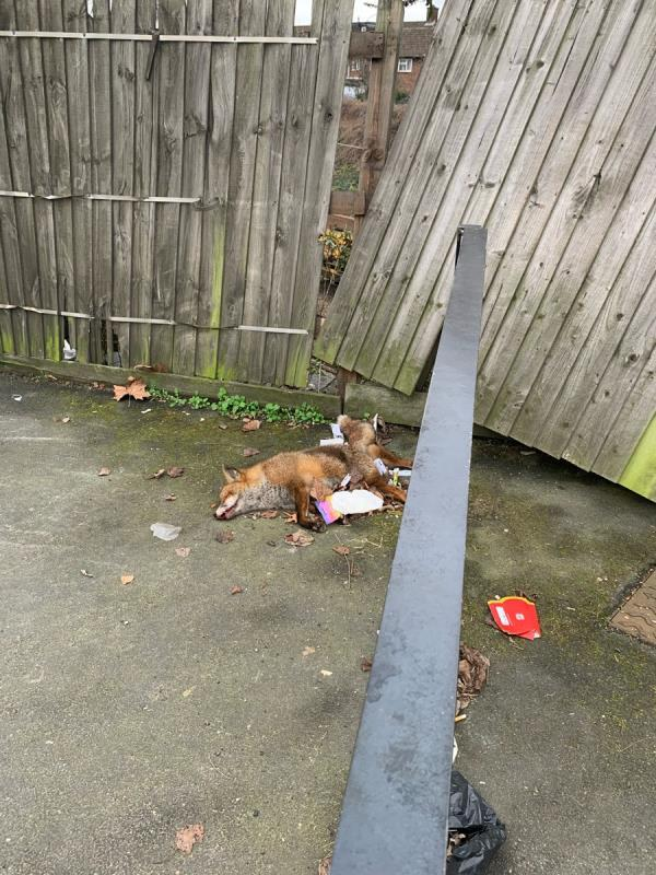 It is a dead fox! -63 Forest Lane, London, E15 4NT