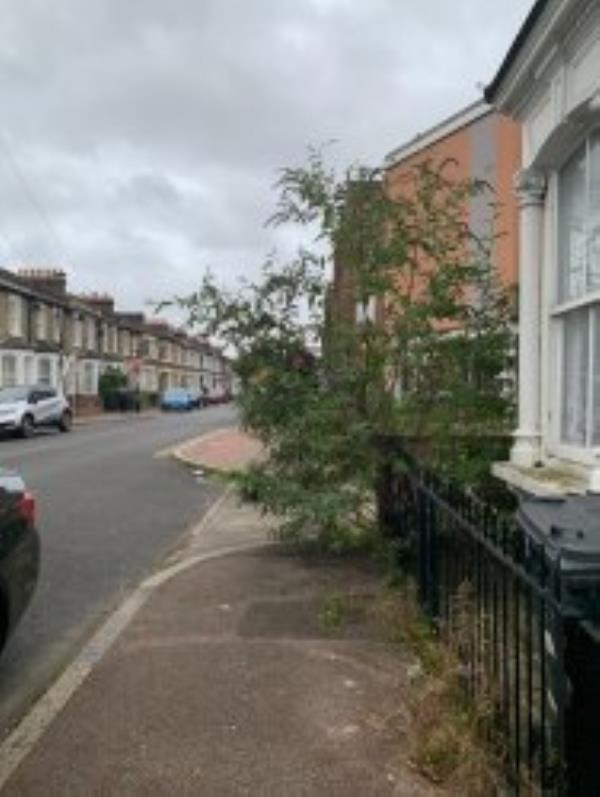It's not possible to walk safely along the footway without stepping into the road because of this bush. Please can it be cut back. > Reported via Fix My Street-3 Hunsdon Road