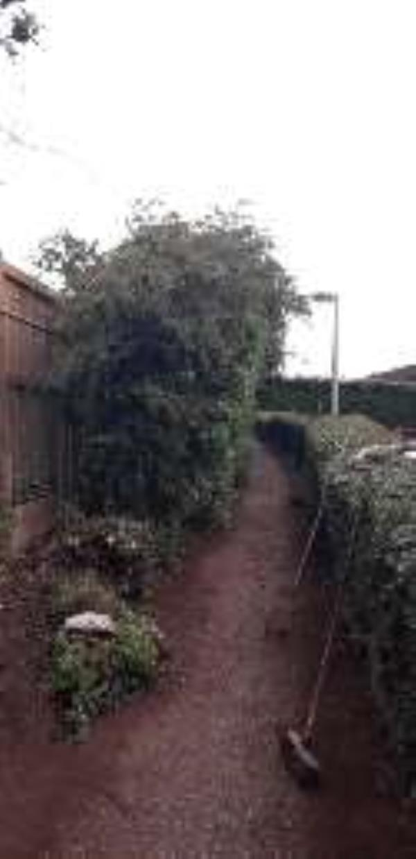 because of building work on the former British Legion Car Park part of the hedge is leaning across the public footpath making it difficult for wheelchair users or pushchairs to use the footpath. as the tree roots have been disturbed and dug through it will only get worse unless action is taken-8 Oathills Cl, Tarporley CW6 0DF, UK