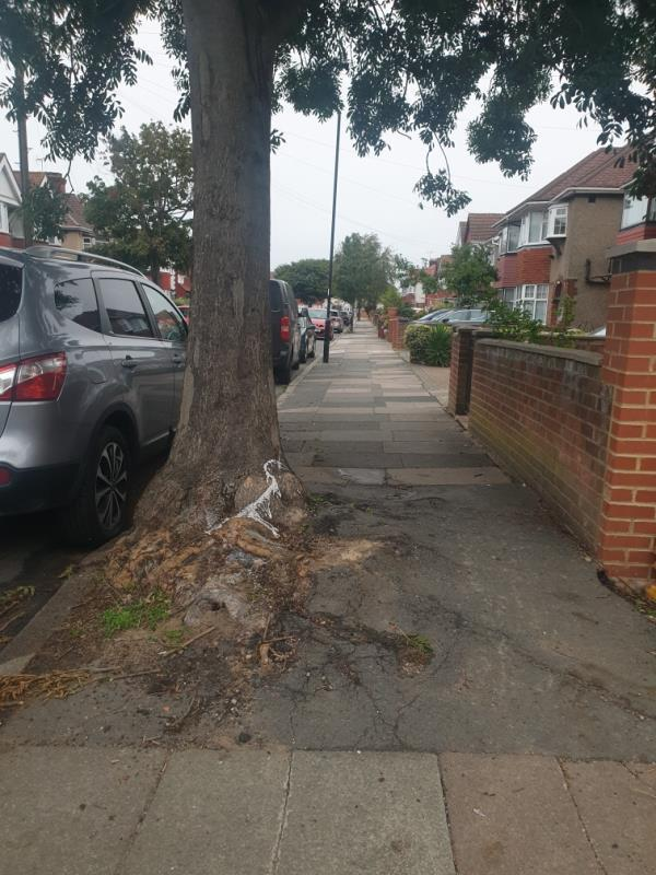 the roots have grown to the point that disabled access is prohibited. -20 Longford Avenue, London, UB1 3QN