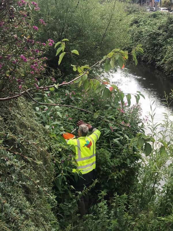 LanqQ manage the embankment rarely. I have gone in to remove as much #Himalayanbalsam as I could see both sides. Also stem injected 10 stalks of Japanese Knotweed. Arisings have gone into Lewisham palladin 1100l bins as nowhere else to go. Total value bin of work done (money saved by LandQ is £500-£1000!). I shall email serepairs@lqgroup.org.uk. Woman ran out to tell me off for loading bins so I explained. Good for her! -2 Smead Way, London, SE13 7GE