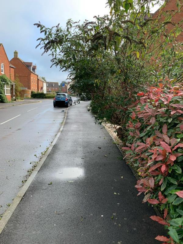 The shown bush is overhanging the footpath and forces me to duck low or walk into the roadway-2 Bramley Way, Angmering, BN16 4GA